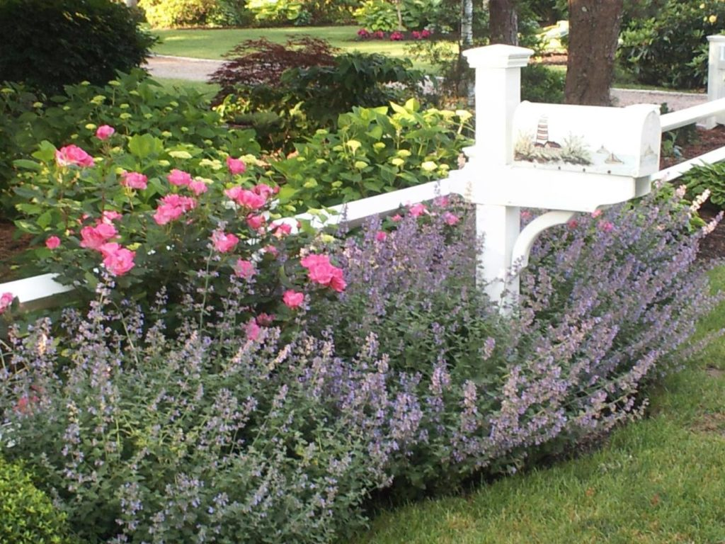 Catmint, hydrangeas and azaleas in full bloom around a mailbox with lighthouse
